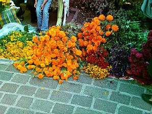 Mexican_marigold
