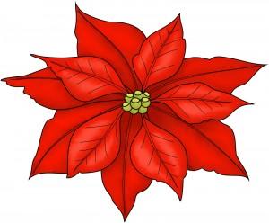 Poinsettia-300x248