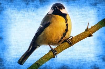 bird-1366705381wd9