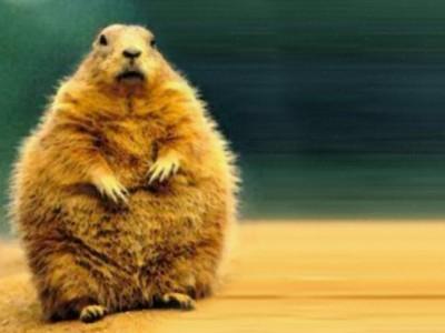 groundhog-1024x768